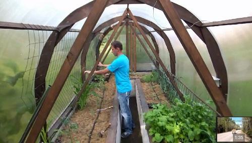 сетка для подвязки помидоров в теплице