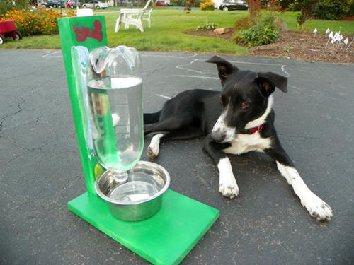 Как сделать поилку для собак