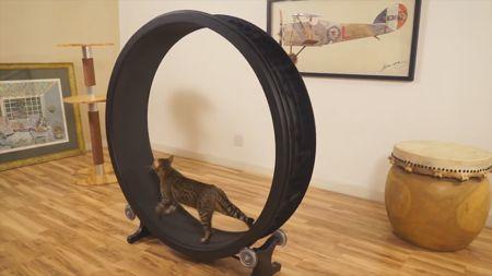 приспособления для кошек