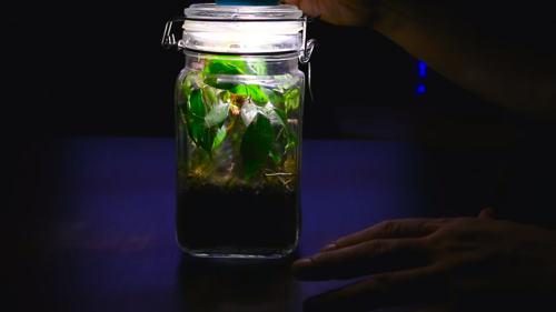 Террариум в банке с закрытой экосистемой