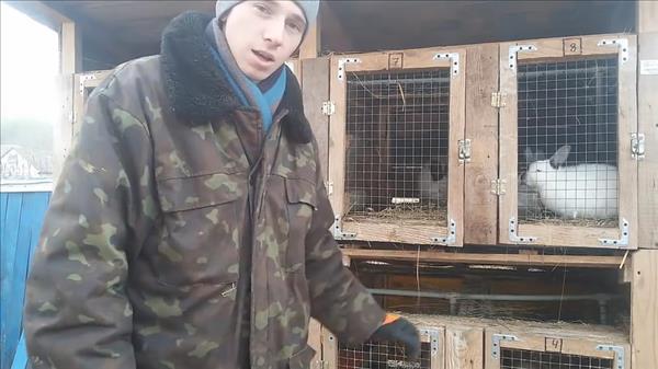 кормушка для сена для кроликов