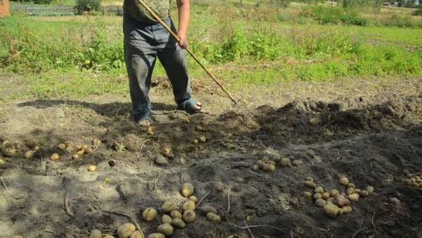 Приспособление для уборки картофеля