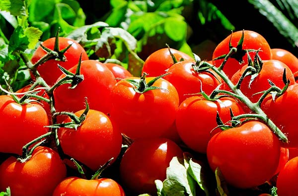 Какие растения можно выращивать в контейнерах дома?