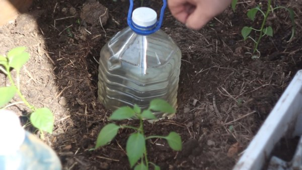 Полив огурцов при помощи пластиковых бутылок