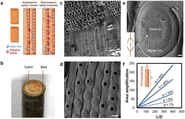 Ученые смогли отфильтровать грязную воду от бактерий с помощью ветки дерева
