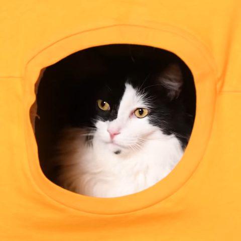 Как сделать игровой комплекс для кошек руками